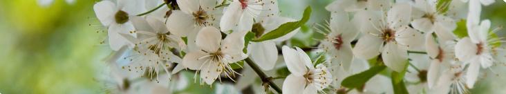 Tavaszi megújulás masszázzsal